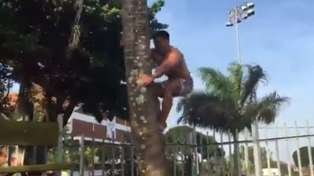 Watch Malakai Fekitoa Climb up Coconut Tree During Post-Training Drinks